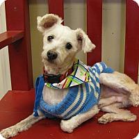 Adopt A Pet :: Calvin - South Dennis, MA