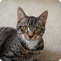 Adopt A Pet :: Toby - Cheltenham, PA
