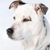 Adopt A Pet :: Brewster - High River, AB
