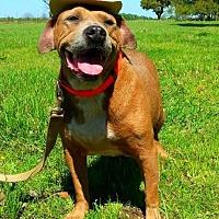 Adopt A Pet :: Hank - N - Huntington, NY