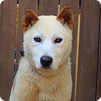 Adopt A Pet :: Bruce Wayne - from Korea - Los Angeles, CA