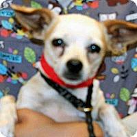 Adopt A Pet :: 351797 - Wildomar, CA