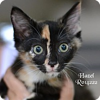 Adopt A Pet :: Hazel - Montgomery, TX