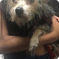 Adopt A Pet :: Fiona - Parsippany, NJ