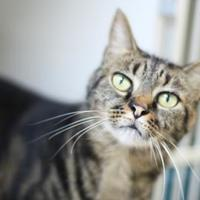 Adopt A Pet :: Lizzy - Manteo, NC