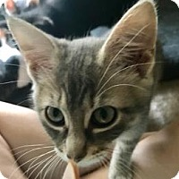 Adopt A Pet :: Gigi 2 - Bulverde, TX