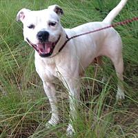 Adopt A Pet :: Cassie - Rockmart, GA