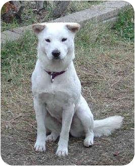 Jindo/Shiba Inu Mix Dog for adoption in Southern California, California - Mei Mei