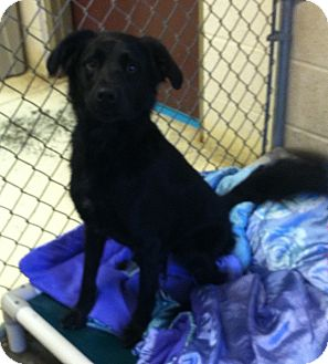 Spaniel (Unknown Type) Mix Dog for adoption in Greensburg, Pennsylvania - Zoe