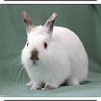 Adopt A Pet :: Pootie - Williston, FL