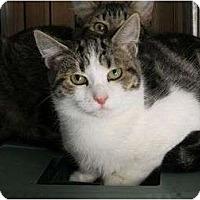Adopt A Pet :: Travis - Rancho Cordova, CA