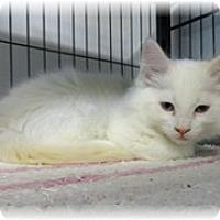 Adopt A Pet :: Virgil - Shelton, WA