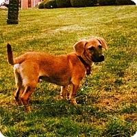 Adopt A Pet :: Bang - Rockaway, NJ