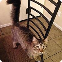 Adopt A Pet :: Abel - Modesto, CA