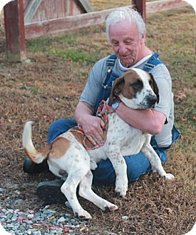 Basset Hound Dog for adoption in Marble, North Carolina - Rudy