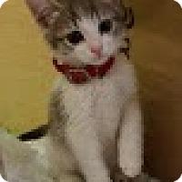 Adopt A Pet :: Snuggles - Modesto, CA