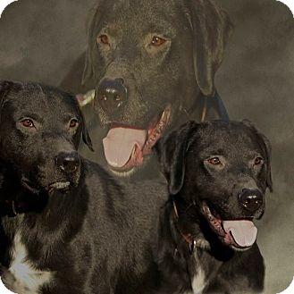 Labrador Retriever Mix Dog for adoption in Waynesboro, Tennessee - Waffles