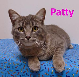 Domestic Shorthair Cat for adoption in Mountain View, Arkansas - Patty