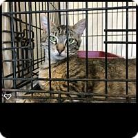 Adopt A Pet :: Isabella - Fallbrook, CA