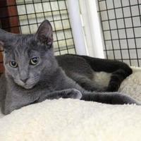 Adopt A Pet :: Posey - Morgan Hill, CA