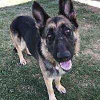 Adopt A Pet :: Cleo - Corning, CA
