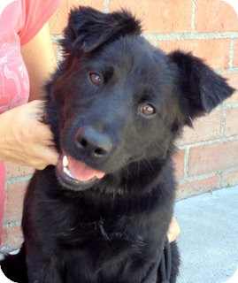 Border Collie Mix Dog for adoption in Los Angeles, California - Tess *VIDEO*