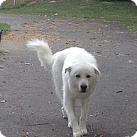 Adopt A Pet :: Sampson - Dandridge, TN