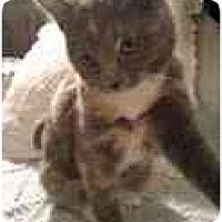 Adopt A Pet :: Cricket - Arlington, VA