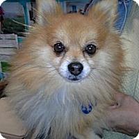 Adopt A Pet :: Leo - Chicago, IL