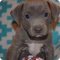 Adopt A Pet :: MONROE - CHAMPAIGN, IL