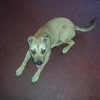 Adopt A Pet :: Mayan - Lake Placid, FL