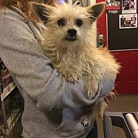 Adopt A Pet :: Wezzie - Matawan, NJ