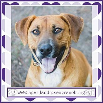 Hound (Unknown Type) Mix Dog for adoption in Southport, Florida - Torro