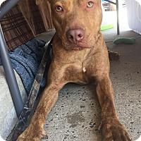 Adopt A Pet :: Denver - Trenton, NJ