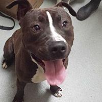 Adopt A Pet :: Cedric - Westminster, CA