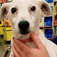 Terrier (Unknown Type, Medium) Mix Dog for adoption in Johnson City, Tennessee - Ella