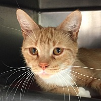 Adopt A Pet :: Sherburt - Jackson, MI