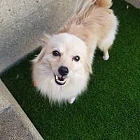Adopt A Pet :: Bryan - Chicago, IL