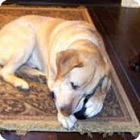 Adopt A Pet :: Duke - Lewisville, IN