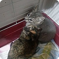 Adopt A Pet :: Rocco and Rocsie - Brooklyn, NY