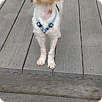 Adopt A Pet :: Vicki - Mt Gretna, PA