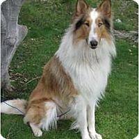 Adopt A Pet :: Tei Aroha - San Diego, CA