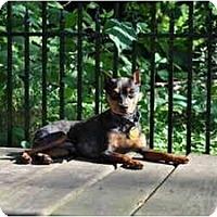Adopt A Pet :: Uno - Minneapolis, MN