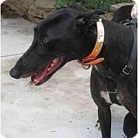 Adopt A Pet :: Jess - Philadelphia, PA