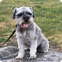 Adopt A Pet :: Bosco - Rigaud, QC