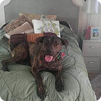 Adopt A Pet :: Valkry - Oviedo, FL