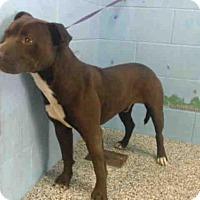 Adopt A Pet :: COFFEE - San Bernardino, CA