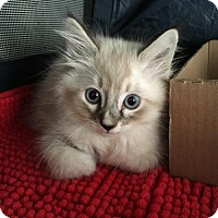 Adopt A Pet :: SINBAD - Lakewood, CA
