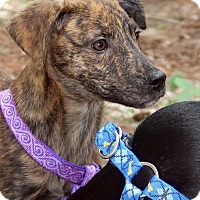 Adopt A Pet :: Fritzy - Burbank, OH