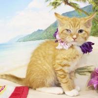 Adopt A Pet :: Braxton - Harrisonburg, VA